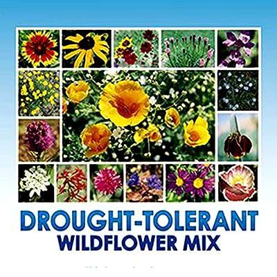drought tolerant plants california