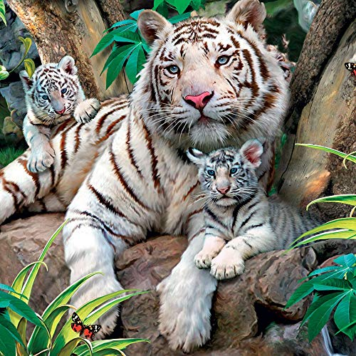White Tigers Blank Greeting Card Lenticular 3D / Holographic - Any Occasion/Birthday