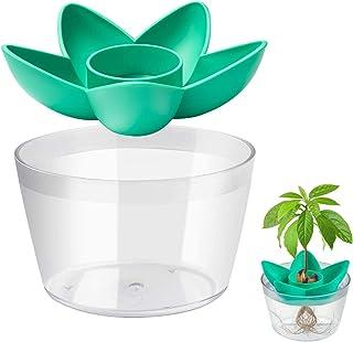 Kit Plantación Aguacate MOSRACY, Cultive Sus Propios Aguacates, Regalos de Jardín Para Mamás y Mejores Amigos,Los Mejores ...
