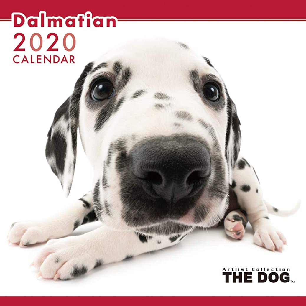 提供する小さい泳ぐTHE DOG カレンダー ダルメシアン 2020年