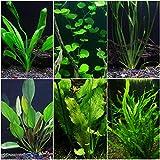 Discus-Warm Water Aquarium Plant Bundle