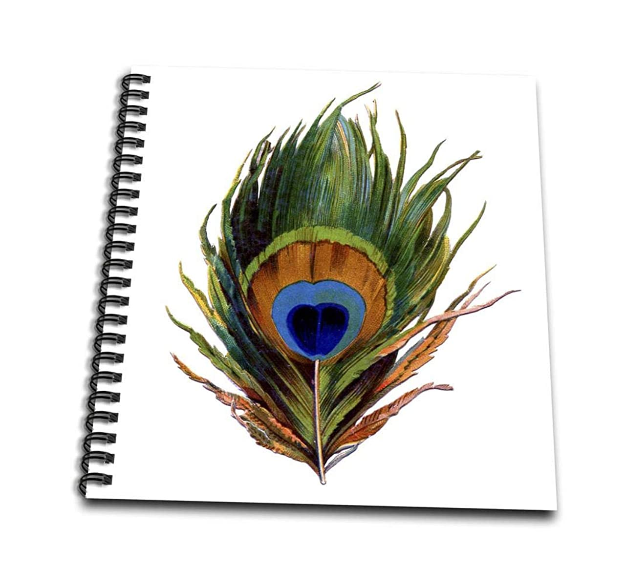 3dRose db_37447_1 Large Colorful Peacock Feather-Drawing Book, 8 by 8-Inch