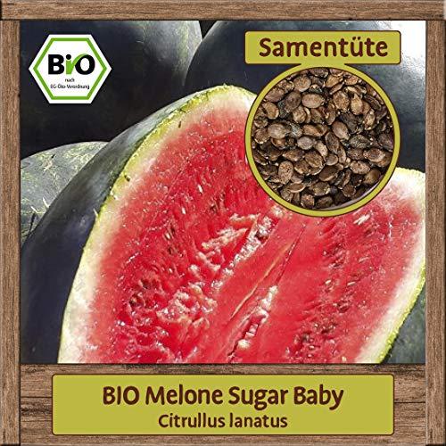 Samenliebe BIO Melone Samen Sugar Baby (Citrullus lanatus) Melonensamen Gewächshaus Wassermelone 8 Korn