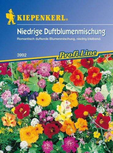 Kiepenkerl Niedrige Duftblumen-Mischung, Duftblumen für den Steingarten