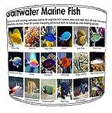 Premier Lighting 30cm Marine Aquarium Fish Lampenschirme15 Für eine Deckenleuchte