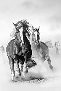 Wild Mustang Horses Running Galloping Free Black and White Photo Cool Huge Large Giant Poster Art 36x54