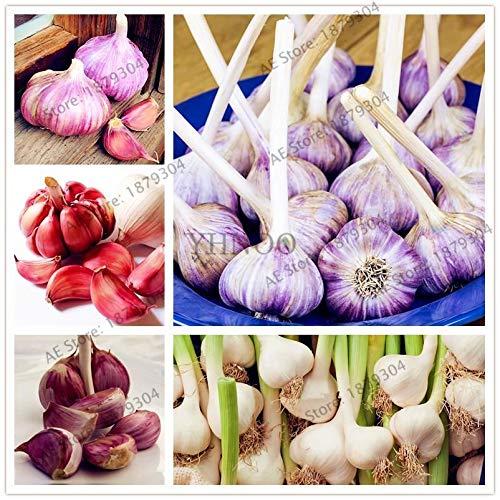 HONIC Mix: 100pcs / Bag Knoblauch Natur- und Bio-Gemüse gesund Bonsai Samen für Garten