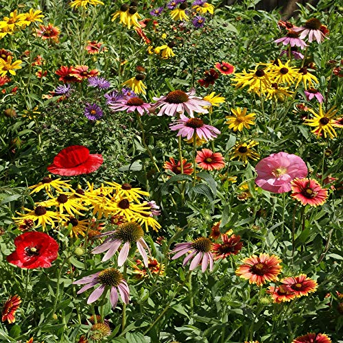 Outsidepride Midwest Wildflower Seed Mix - 1 LB