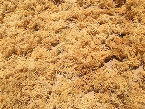 Sea Moss/Irish Moss - Wildcrafted - 100% Natural, Raw, Vegan, Imported from St. Lucia - Salt Free, Sand Free and Dry | Dr. Sebi - (8oz)