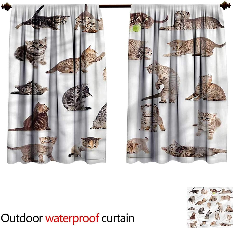 BlountDecor Curtain for outdoorAntiWater W55 x L45(140cm x 119cm) Cat,Funny Playful Baby Kitten Pet