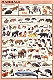 (24x36) Mammals Educational Science Chart Poster