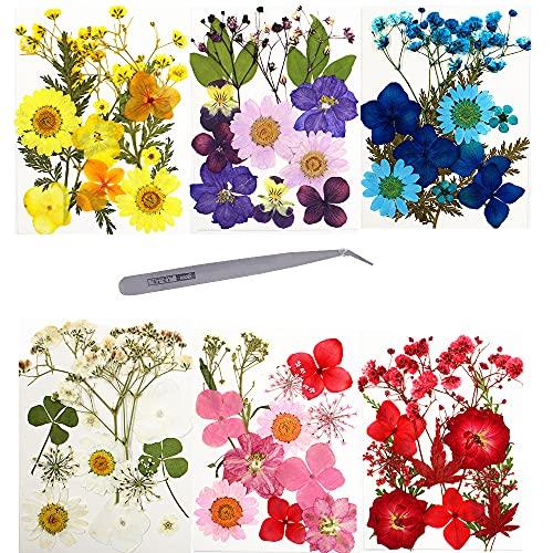 Kaimeilai 72 piezas de flores secas auténticas prensadas secas, flores secas naturales, flores mixtas, hojas secas, para manualidades de resina, 72 unidades