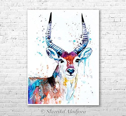 illustration Red Lechwe watercolor painting print by Slaveika Aladjova gift Nursery Wildlife wall art animal art home decor