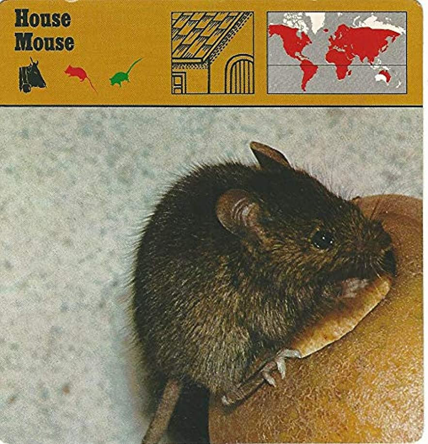 1975 Editions Rencontre, Animals Card, 08.170 House Mouse