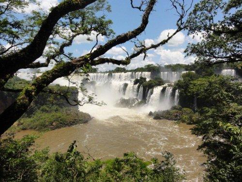 ワイルドライフ 南米 イグアス 世界最大の滝に野生が集う [DVD]