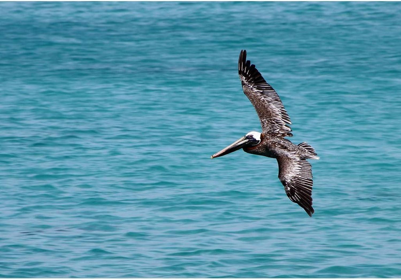 Lais Jigsaw pelican 2000 pieces
