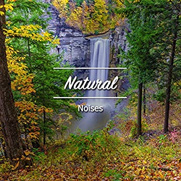 #18 Natural Noises for a Great Nights Sleep