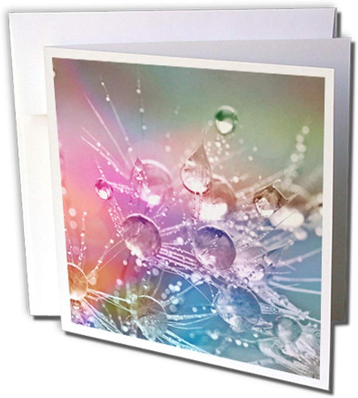 3dRosa gc_233978_2 Grußkarten Wassertropfen auf LöwenzahnBlaume , 15 x 15 cm, 12 Stück B0764MPZG1   Verrückter Preis, Birmingham