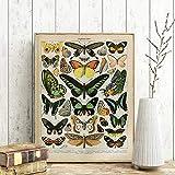 Cuadros en lienzo Planta Cartel retro Flor Animal Insecto Mariposa Setas Arte de la pared Pintura en lienzo Decoración para el hogar Obra 42x55cm (16.5x21.7in) Sin marco