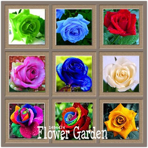 Big Sale! Pots de fleurs jardinières, 20 types, 50 PCS / Lot, Rainbow Rose semences Belle rose semences Bonsai plantes Graines, # B4LT8H