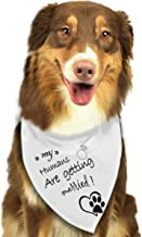 Fresquo My Humans are Getting Married Dog Bandana Scarfs for Small to Large Dogs Wedding Dog Bandana with Adjustable Dog Engagement Announcement, Wedding Photo Prop, Pet Scarf, Pet Accessories