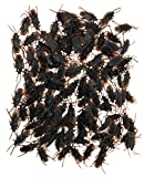 TheGag Fake Cockroaches 144-2 Inch Disgusting Realistic Looking -Gross Fun Prank Big...