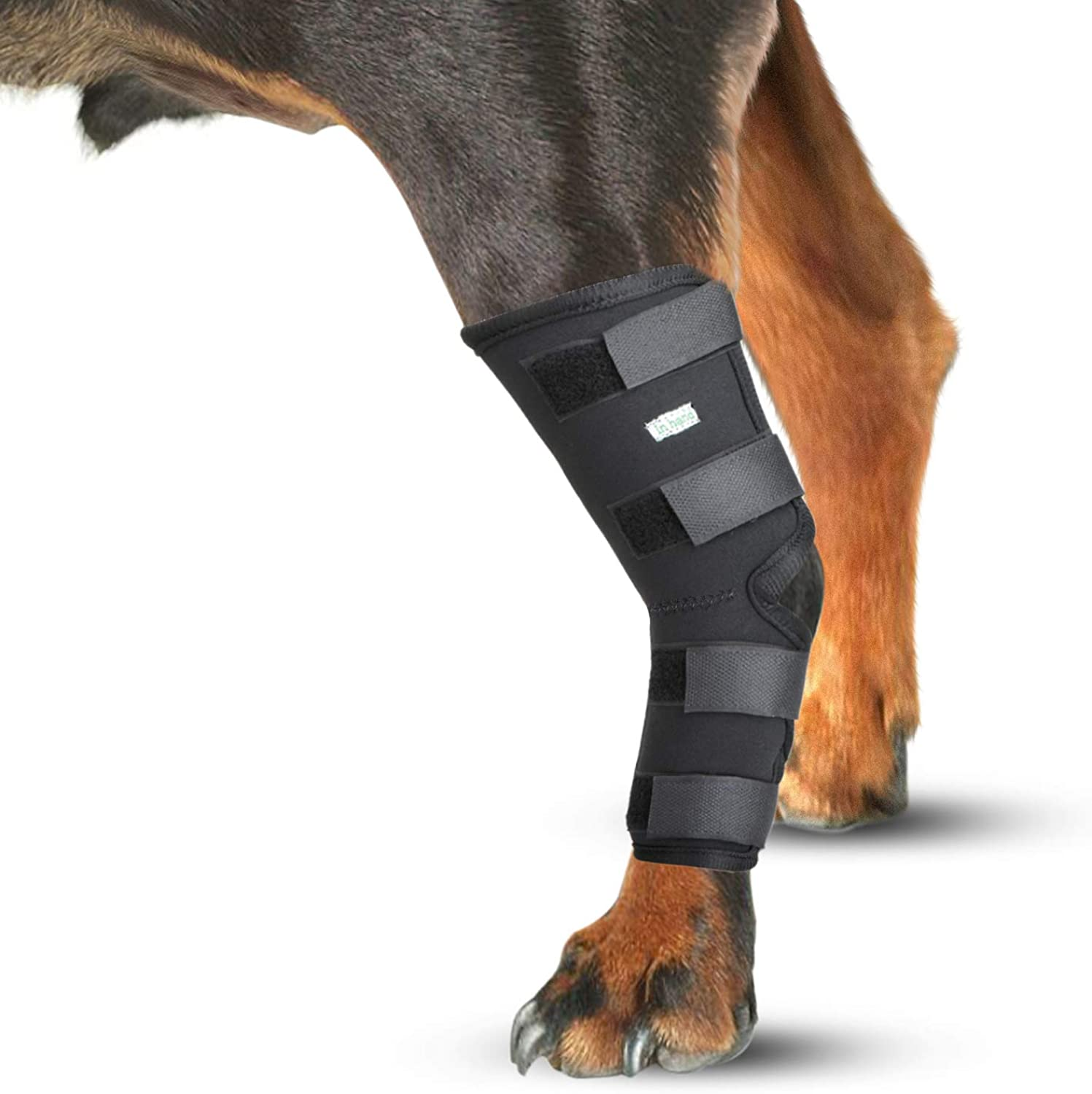 IN HAND Leg Brace for Dogs, Pair of Dog Canine Rear Leg Hock Joint Wraps Predects Wounds As They Heal Compression Brace Heals, Prevents Injuries and Sprains, Dog Rear Leg Hock