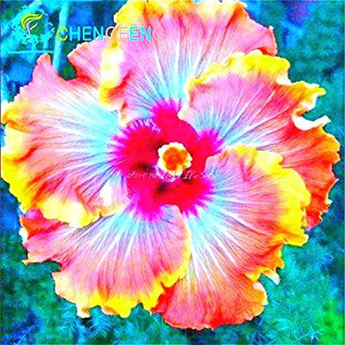 Circa 100 Pezzi / Lotto Giganti di fiori di ibisco semi Garden & Home perenne piante in vaso Fiori Gombo Hibiscus bonsai dell'erba Seed