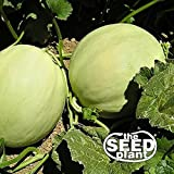 Honeydew Melon Seeds - 50 Seeds Non-GMO