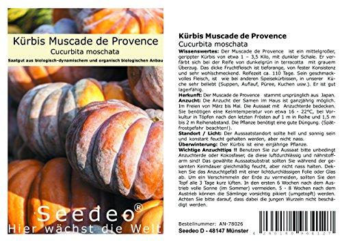Seedeo® Kürbis Muscade de Provence (Cucurbita moschata) 7 Samen BIO
