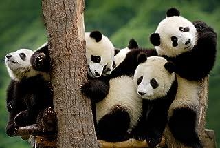 Cute Panda (N08) - Animal Picture Art Print Canvas Poster(16x24inch)