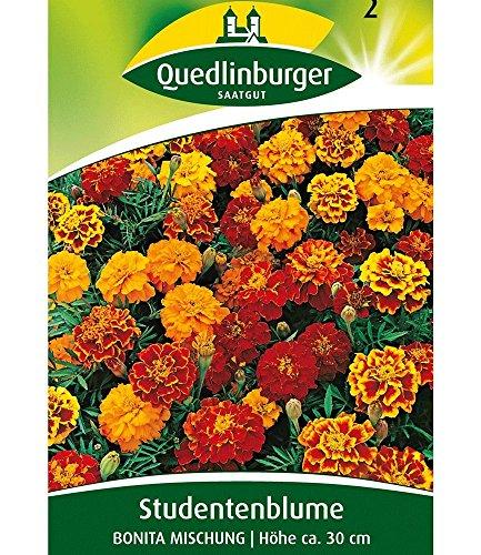 Quedlinburger Gefüllte Tagetes-Mischung, 1 Tüte Samen