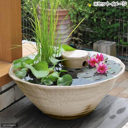 charm(チャーム) 益子焼 彩(SAI) 睡蓮鉢(スイレン鉢) 古信楽 白鏡 メダカ鉢 隠れ家付