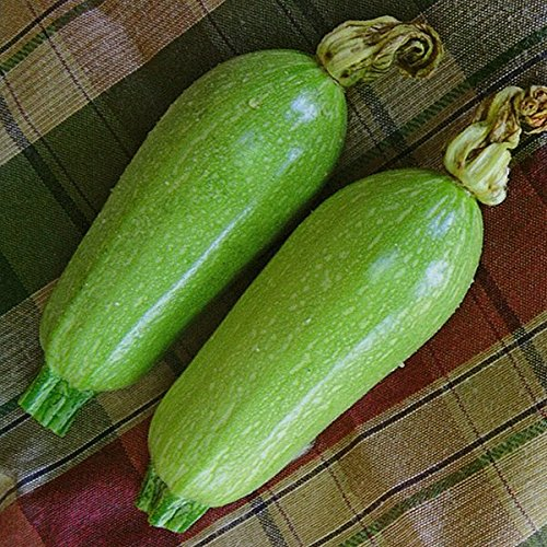 Courgette Clarion F1(Lebanese tipo)