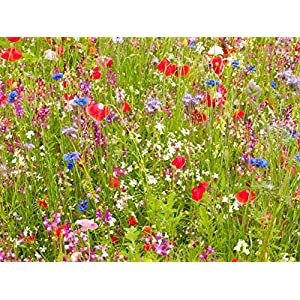 100g Ancient British Meadow Wild Flower Rare Grasses 70/30 Mix Mix 71 by Pretty Wild Seeds