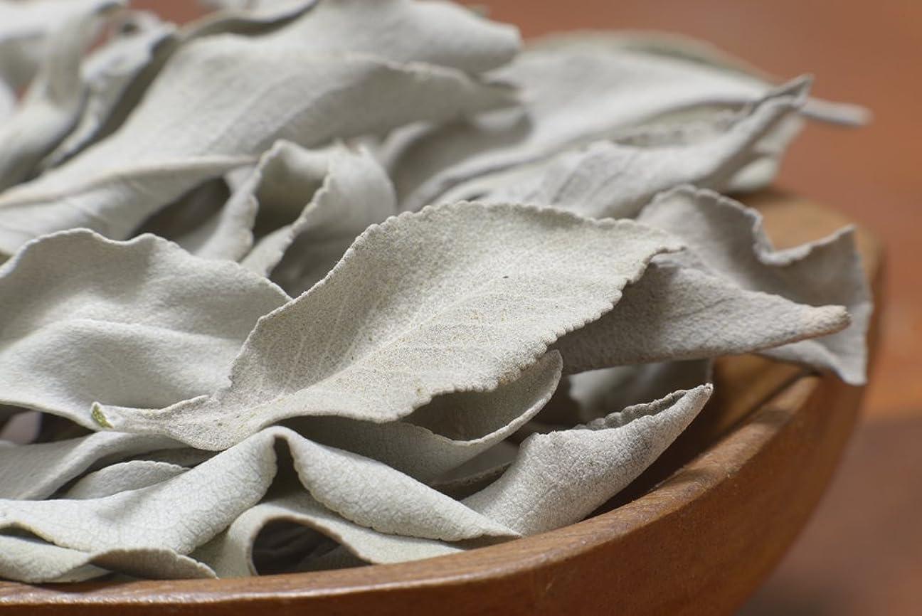 絶望混乱させる豚肉最高級カリフォルニア産オーガニック ホワイトセージ 50g入り (葉+茎タイプ) 無農薬栽培 浄化用 スマッジング用として