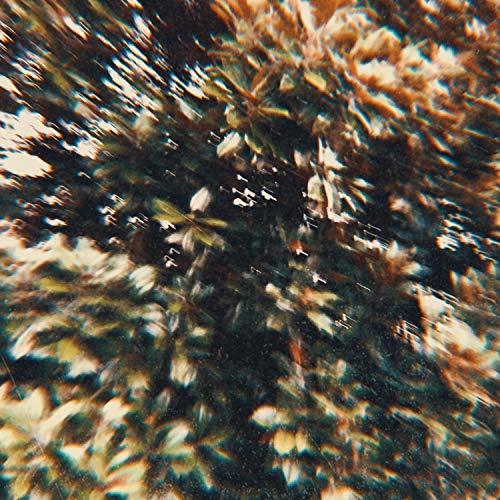Orchid (feat. Morgan Bates)