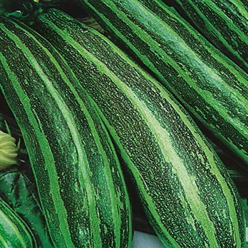 Courge - Longue Verte Buisson - 20 Graines