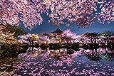 zhangshifa Puzzle 500 Piezas,Rompecabezas Madera Clásico De Bricolaje,Japón Sakura Lago Jardín Vista Nocturna Jigsaw Puzzles,Juegos De Puzzle para Adultos Niños Póster Rompecabezas Regalo