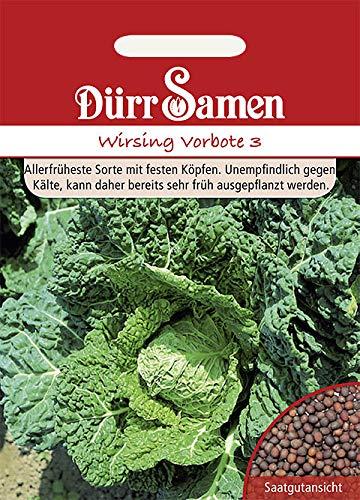 Dürr-Samen - 200 x Wirsing