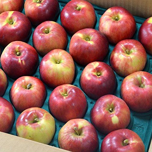 青森産葉とらず紅玉りんご大サイズ18-20個(4kg前後)