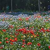 Miscela di semi di fiori selvatici, fiori perenni resistenti facili da coltivare, eccellente miscela per tutti gli usi, ideale per aiuole e bordi, vasi e contenitori per terrazze (100000-1000000 +)