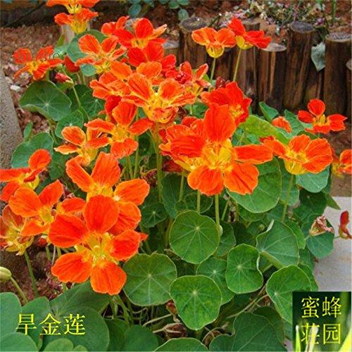 Vente Top Mode d'été Exclus régulier Embellir Tempéré Plantes Balcon Petit Mini extérieur sécheresse semences 20 graines sèches 2