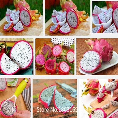 100Samen von Obst weiß Dragon Saatgut Drachenfrucht/Pitahaya/Hylocereus Undatus 6SELTEN Mix Colors