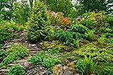 Selezione perenne per giardini rocciosi - 25 semi