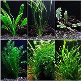 AquaLeaf Aquatics Low Light Plant Bundle - 6 Plant...