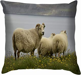 Wild White Icelandic Sheep Animals Wildlife Agriculture Parks Outdoor Funny Square Throw Pillow Cases Cushion Cover for Bedroom Living Room Decorative 24X24 Inch