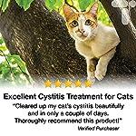 Transforme Cystassist Boîte de 180 capsules de glucosamine pour traiter la cystite chez le chat #3