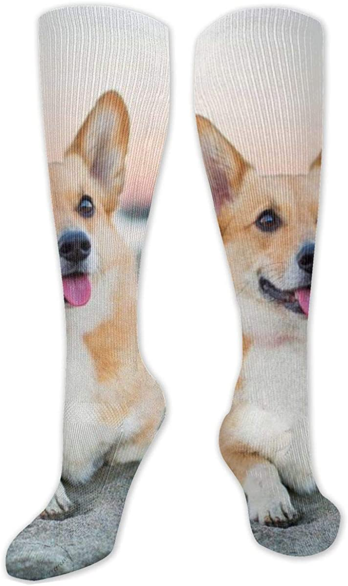 Corgi Dog Beach Pets Dogs Knee High Socks Leg Warmer Dresses Long Boot Stockings For Womens Cosplay Daily Wear