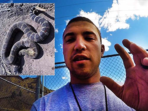 Rattle Snake Almost Bit My Hand